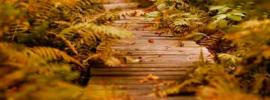 Wood_plank_path